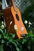 ukulele_festival