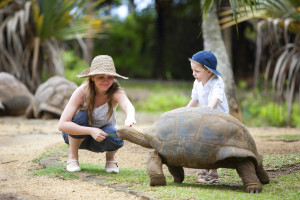 Fun activities in Mauritius. Family feeding giant turtle.