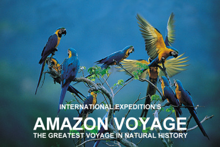Amazon Voyage with International Expeditions