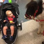 At CVG Airport, Miniature Ponies Cheer Up Passengers In Long TSA Lines