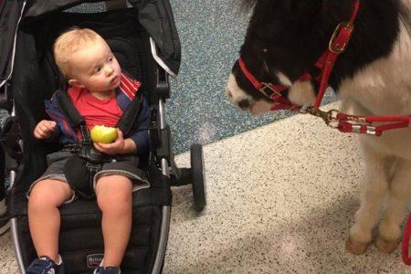 At CVG Airport, Miniature Ponies Cheer Up Passengers In Long TSA Lines