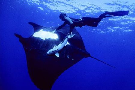 Snorkel with Manta Rays at Night on the Big Island
