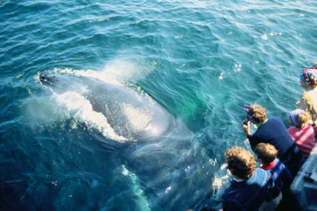 See Amazing Humpback Whales on Your Alaska Cruise