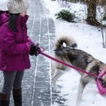 Meet Maola, Alaskan Malamute Puppy and Four Seasons Whistler Ambassador