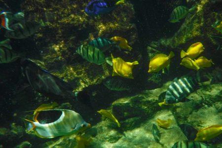 """Snorkel with Tropical Sea Life in Tahiti at a Unique """"Lagoonarium"""""""